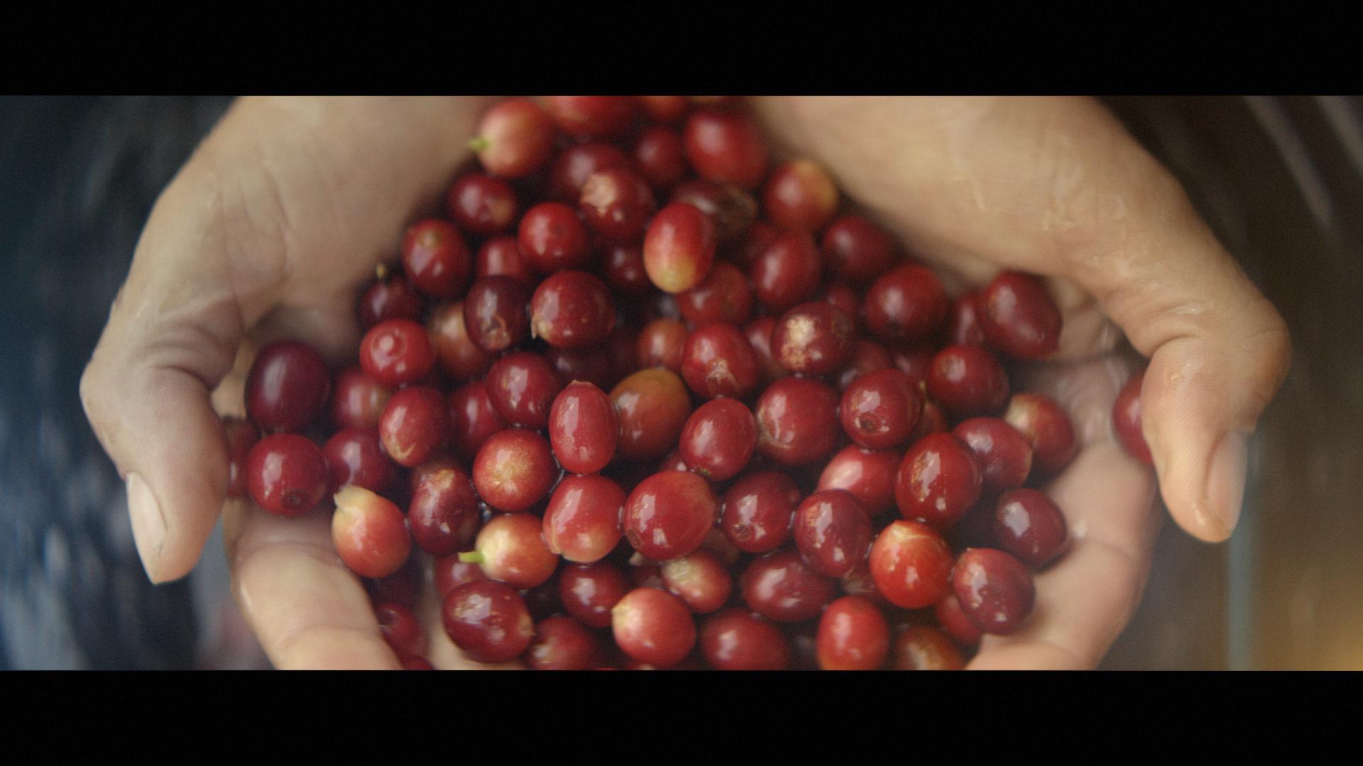 BKI_Image1_Brazil_Kaffe_Import_14_35s_32822.mov.01_00_16_03.Still006
